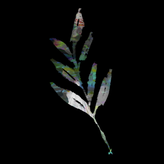 albumleaflogo_leaf_invert